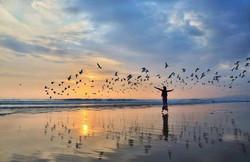 plage-oiseaux