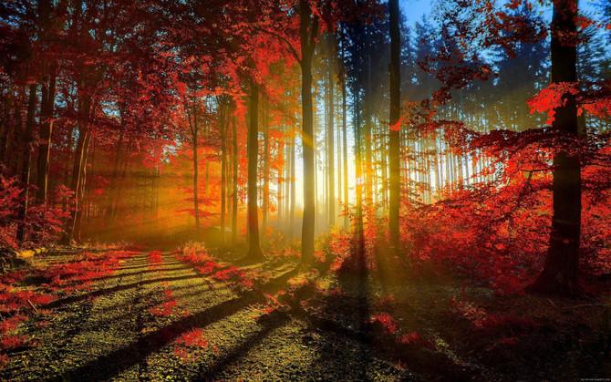 La invitación del otoño