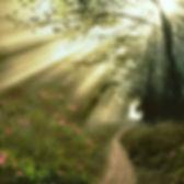 Camino-flores-y-luz.jpg