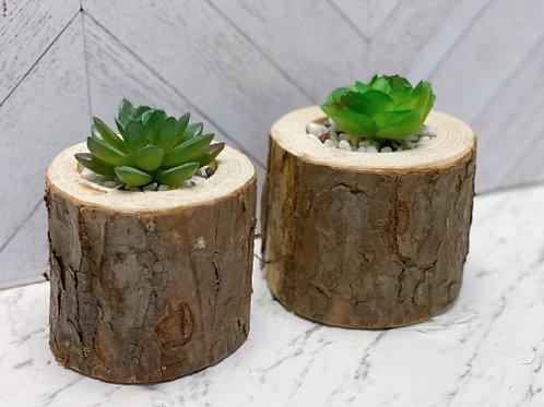 עציץ סוקולנט גזע עץ-קטן