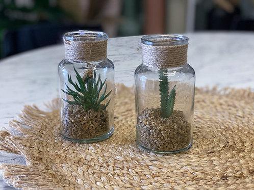 בקבוק זכוכית סוקולנט קטן