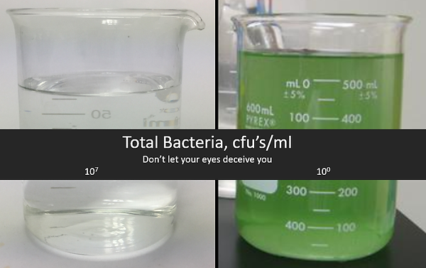 Bacteria & Water.png