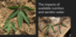 growth-leaves-banner.png