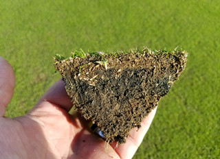 Mitigating Black Matter and Restoring the Health of Your Turf with WaterSOLV BC