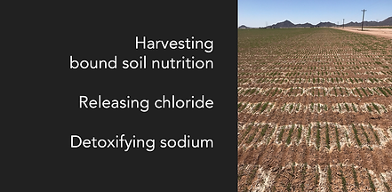 agronomy-detoxify-sodium-banner.png