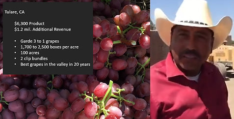 Tulare Grapes.png