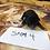 Thumbnail: Black tri male(smm4)