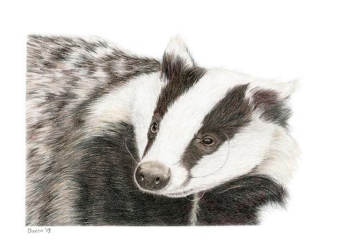 Badger A4.jpg