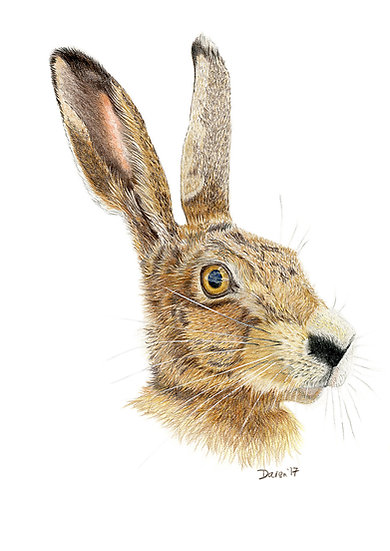 """'March Hare"""" Giclee Limited Edition Print"""