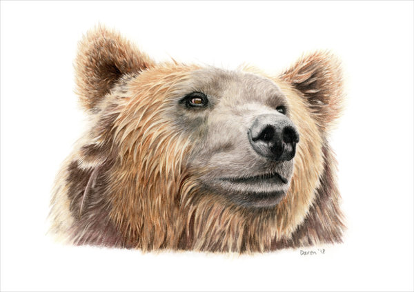'Brown Bear' Limited Edition Print