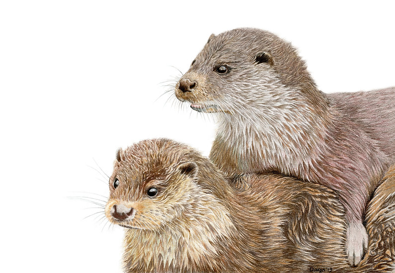 'Eurasian Otters' Limited Edition Print