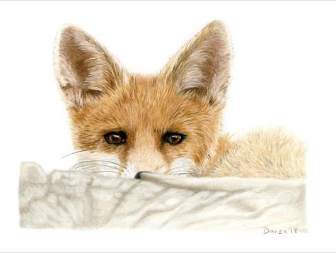 Fox Cub - Original and ltd edition prints available