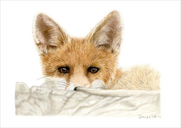 'Fox Cub' Limited Edition Print