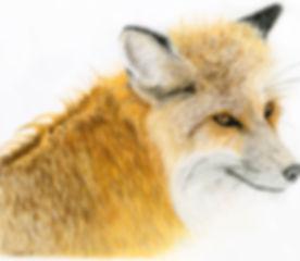 FOX A3 300ppi.jpg