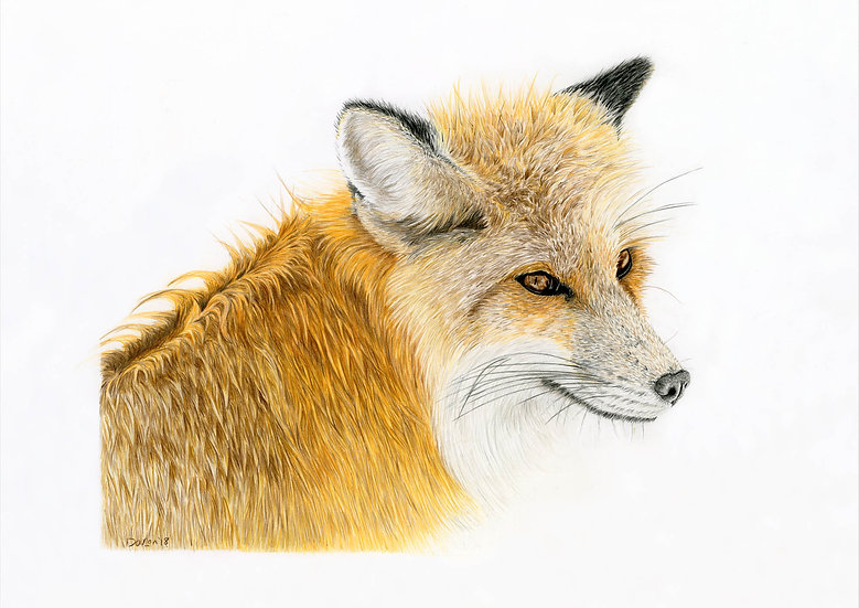 'Winter Fox' Giclee Limited Edition Print