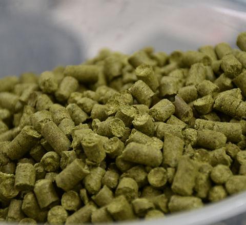 houblon belge pour Bière Artisanale