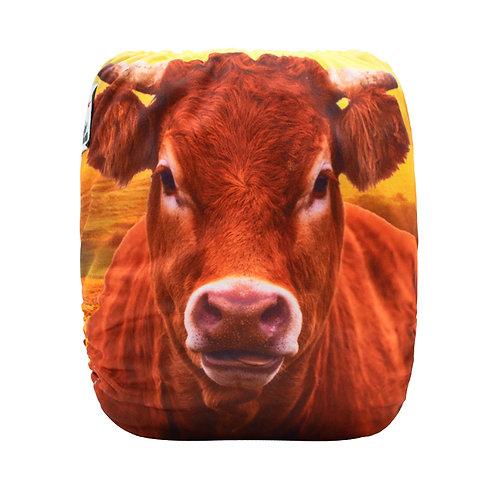 Round 11 Sunflower Cow