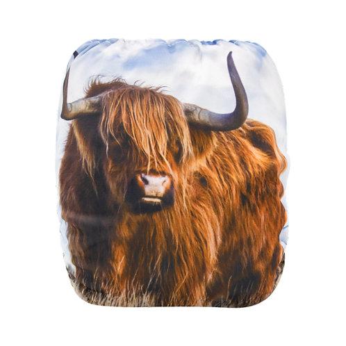 Round 15 Highland Cow Rerun