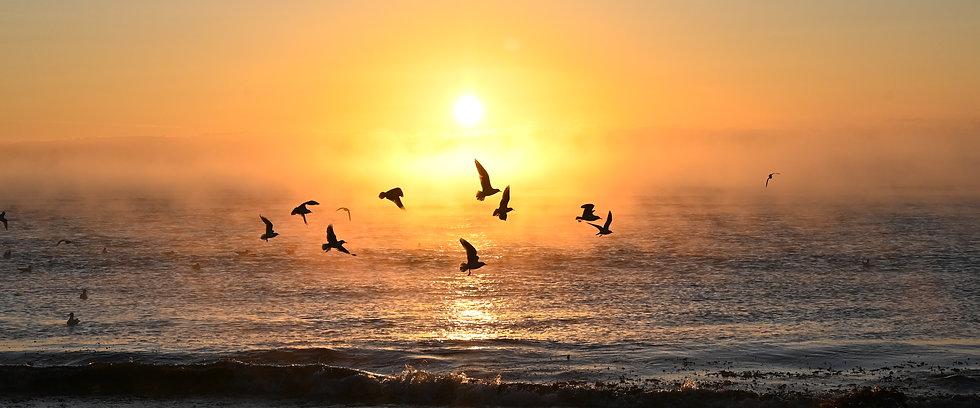 Flocking  to the beach - Panorama