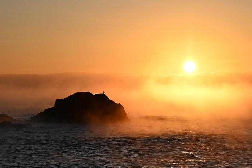 Cormarant at sunrise