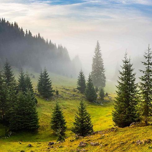 forestbidder-background2.jpg