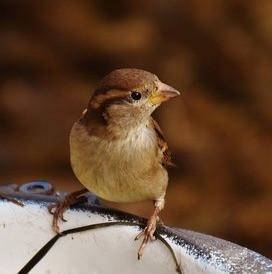 My Friend, The Little Bird