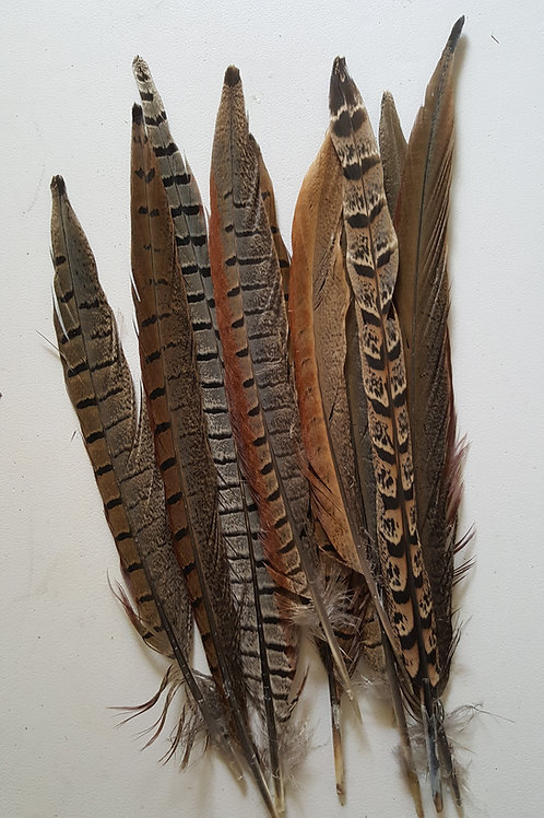10 Tail feathers - millinery, arts, crafts