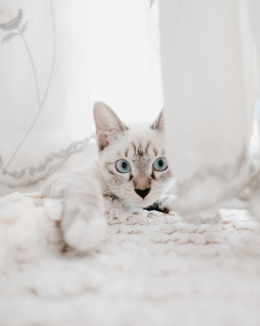 Cat 2 BACK DROP IMAGE FROM UNSPLASH.jpg