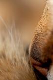 Australia's Flora and Fauna - The side profile of a feline nose. (A tabby cat) NSW Australia.