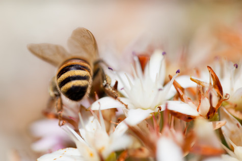 Australian Nature Photography - Flora and Fauna - INSECT IMAGE GALLERY