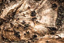 Australia's Flora and Fauna - The fabulous bark of a gumtree. NSW Australia.