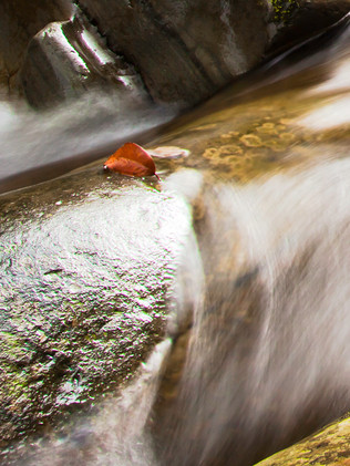 Australian Nature Images - Flora and Fauna - Casading Water