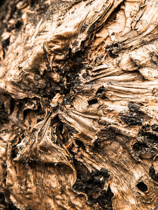 Australian Nature Images - Flora and Fauna - Tree Bark