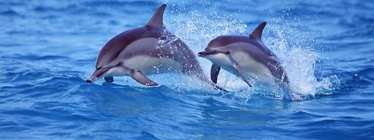 Daytona Dolphins boat.png