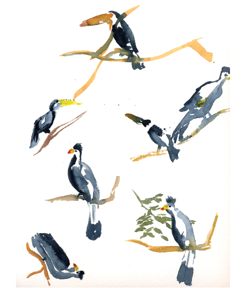 """Bird study"""