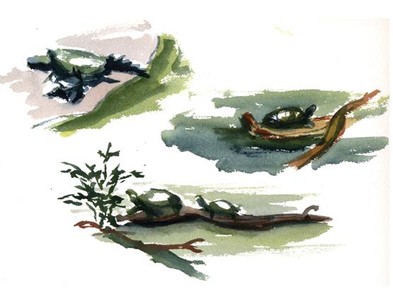 """Turtle study"""