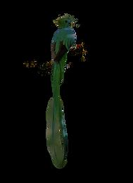green%25252520bird%25252520on%25252520tr