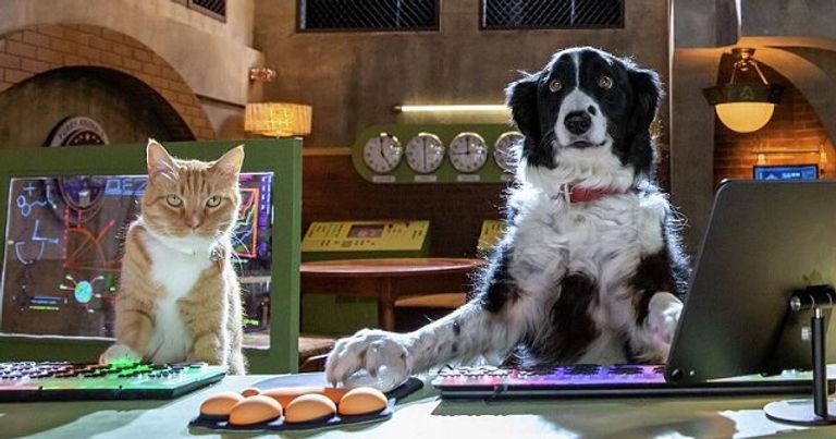 cats-dogs-3-640x336.jpg