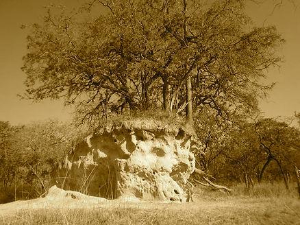 APHA termite mound