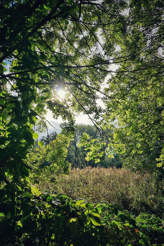 Bestensee Brandenburg Sumpf Sonne Bäume Natur Fahrradtour