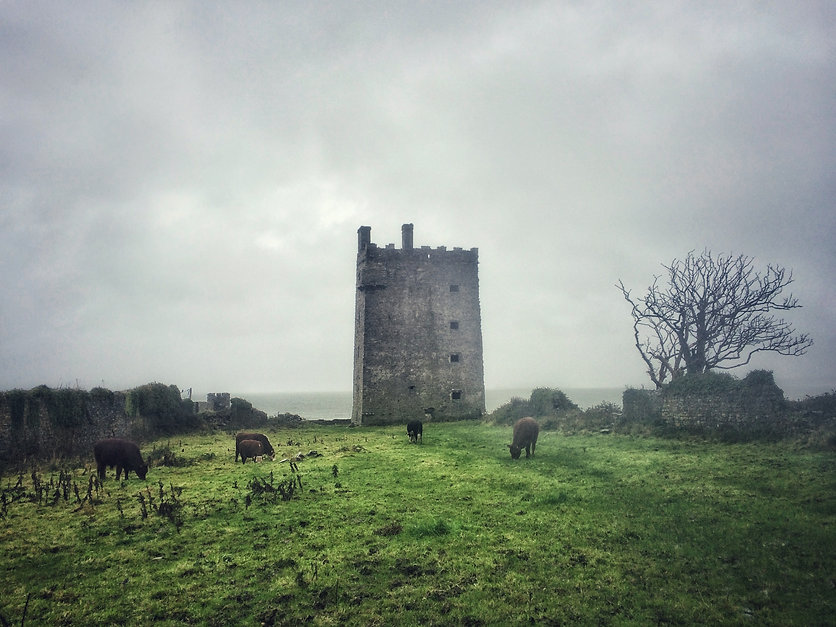 20151114 1041 Irland Carrigaholt Castle
