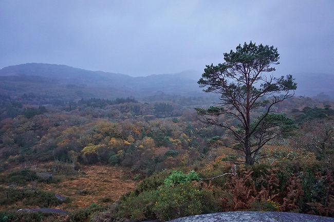 Glengarriff Woods Reserve, Barley Lake, County Cork, Irland, Lars Hauck