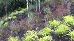 plants020.jpg