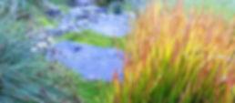 EoN_plants.jpg