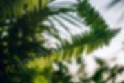 ferns_nipanan-lifestyle-1061787-unsplash