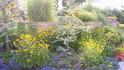 plants009.jpg