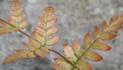 plants012.jpg