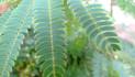 plants003.jpg