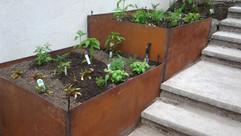 plants024-1.jpg