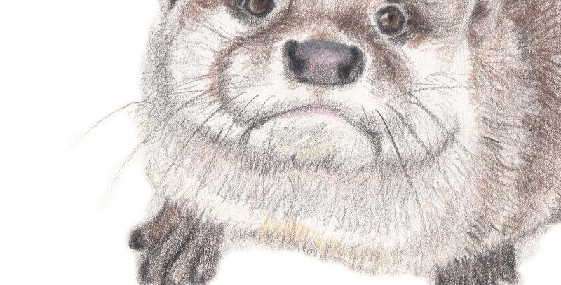 Orla the Otter